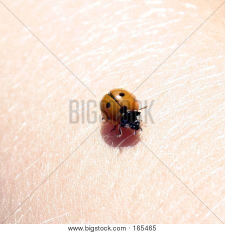 Bug On Arm