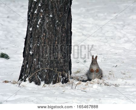 Squirrel under the tree in the morning