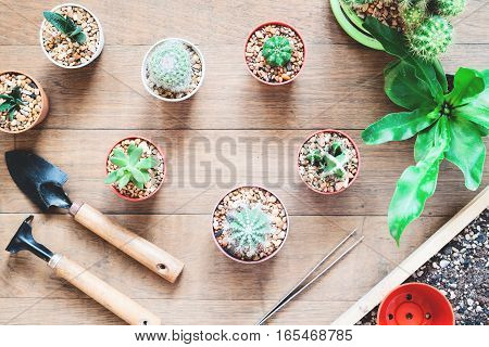 Variety of cactus and pot plants with garden tools on wood background