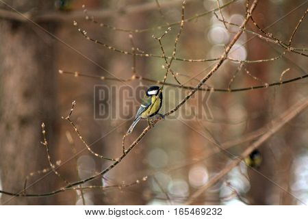 Bird on branch in wintertime. January, park