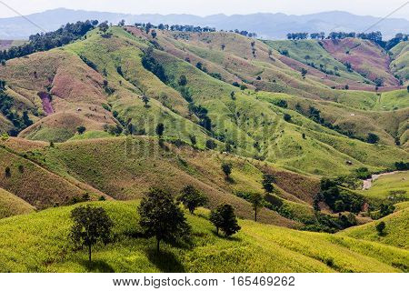 Deforestation for shifting cultivation the bald mountain in Thailand.