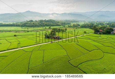 Rice farm Map Bird Eye View in Thailand