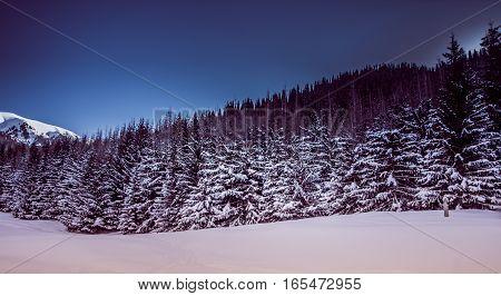 Mountain Winter Landscape In Kazakhstan Near Almaty City