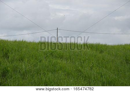 Old Electrique Pole Field Sugar Cane Grass