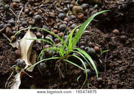 Grass Green Earth Soil Plants Young Shoot