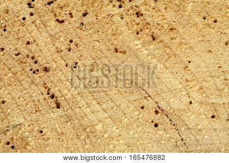 Light brown wooden background in rustic style.