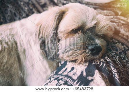 Sleepy dog dog sleep on human legs