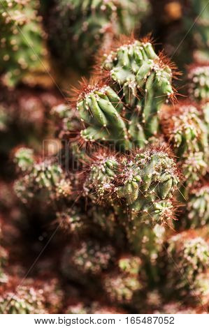 cactus flower on rocks. closeup photo. soft background
