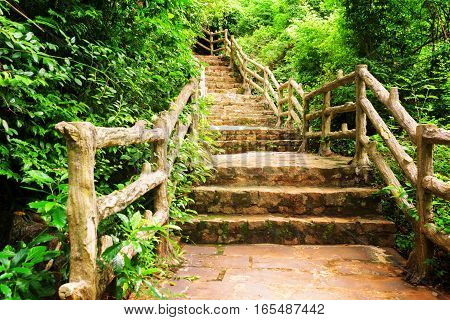 Stone Stairs Among Green Foliage Leading Across Scenic Woods