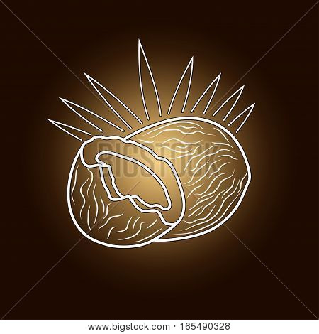 Image Coconut in the Contours on a Dark Brown Background