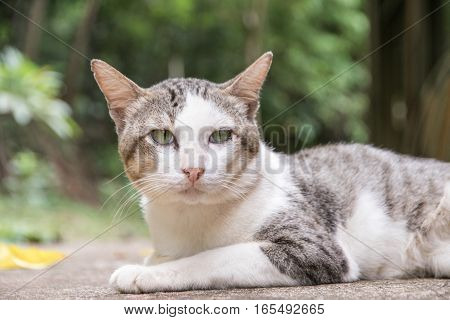 Cat With  Light Brown