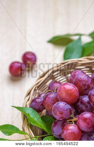 purple round grapes on old wooden table. Bunches of fresh ripe red grapes on a wooden textural surface. Ancient style, a beautiful background with a branch of blue grapes. Red wine grapes. dark grapes, blue grapes, wine grapes