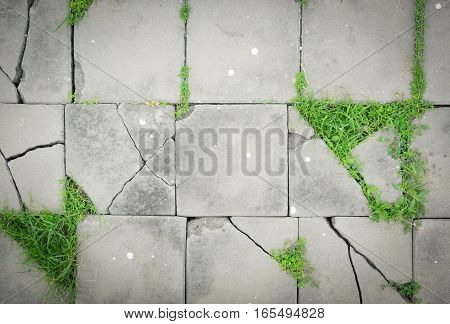 Pattern of cracked paving blocks floor with weed or unwanted flora or grass soft focus for background.
