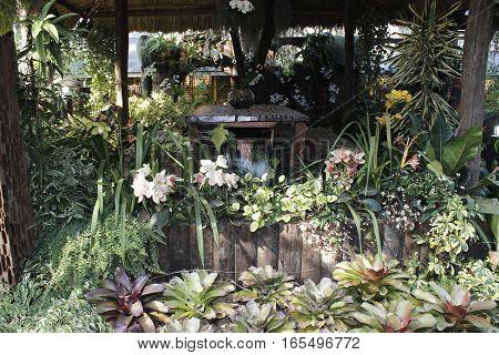 Backyard garden with varieties of flowering plants