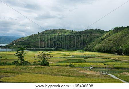 Rice fields in river delta, Sumatra, Indonesia