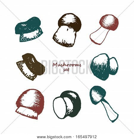 Set of eight hand drawn mushrooms. Vector doodle sketchy illustration. Boletus, chanterelle, agaric and russala collection.