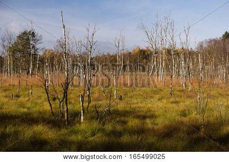 Moorlands In Northern Germany