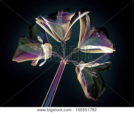 Color Glass Flower Isolated On Black , The Amaryllis