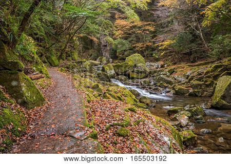 Beautiful in nature the Akame 48 waterfalls in autumn Mie Prefecture Japan