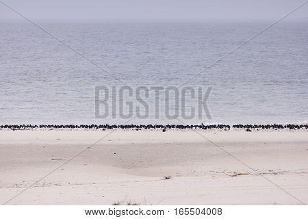 Birds On North Frisian Island Beach Of Amrum In Germany