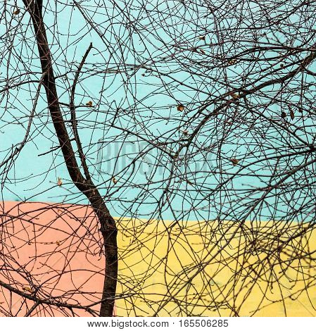 The tree against the wall of a residential building,painted a cheerful painter