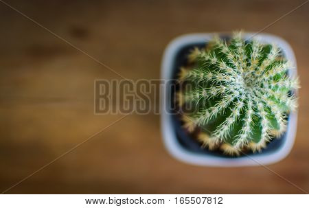 Cactus in a pot on the wooden floor.