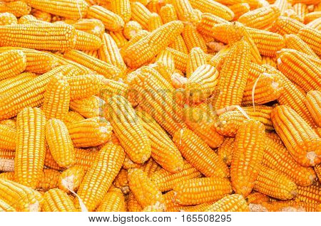Sweet corn is put are row in the market.