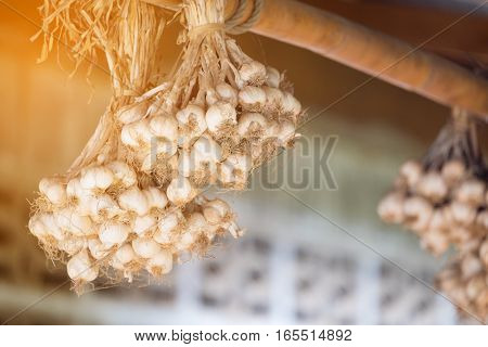 bouquet of garlic with blur background with flare