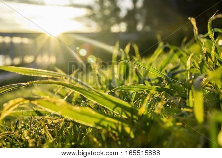 Green grass detail texture under sunset light