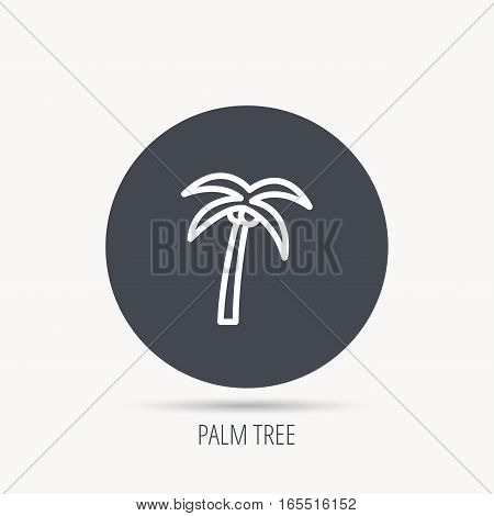 Palm tree with coconuts icon. Travel or vacation symbol. Nature environment sign. Round web button with flat icon. Vector