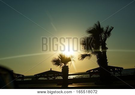 Tropical view on the beach with sun light and palm trees