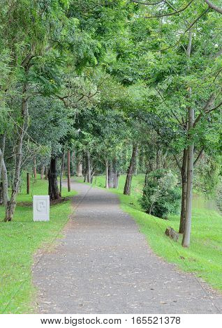Londrina, Pr, Brazil - December 24, 2016: Stone Walk Trail With Several Trees Around.