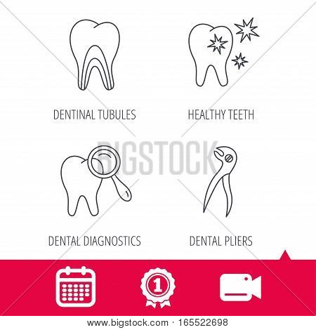 Achievement and video cam signs. Healthy teeth, dentinal tubules and pliers icons. Dental diagnostics linear sign. Calendar icon. Vector