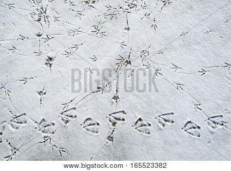 Bird tracks in the snowy sand on the beach closeup