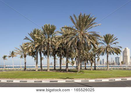Palm trees at the Al Mamzar beach in Dubai United Arab Emirates