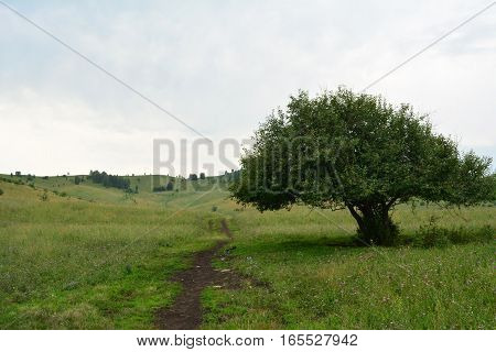 Lone tree and a country road. Summer
