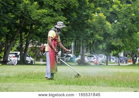 Cutting grass in garden with the trimmer