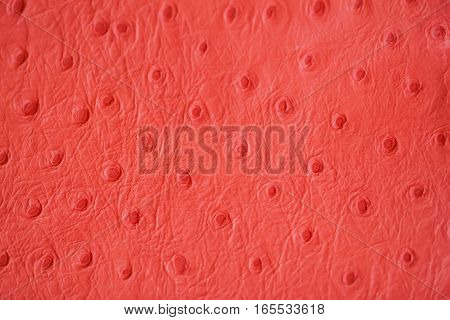 Texture of genuine Ostrich Stamped leather close-up, fashion, trend, exotic background