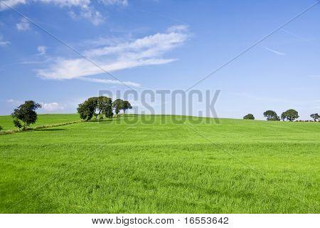 Yeşil alan ve mavi gökyüzü arka plan