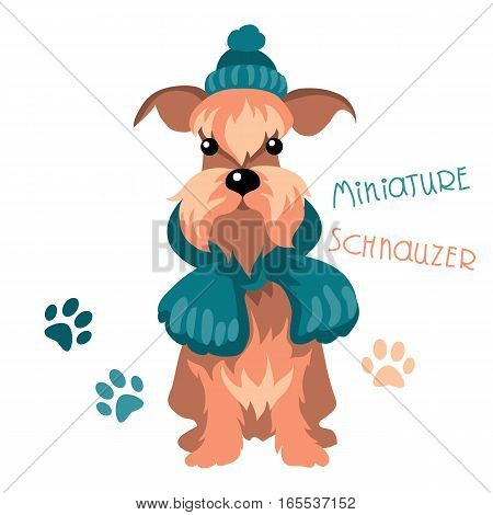 Vector dog breed Miniature Schnauzer in warm winter knit hat and scarf