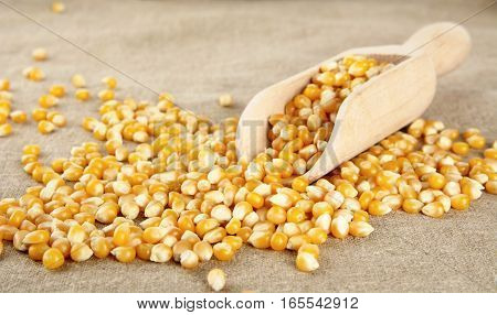 Scattered Dried Corn With Scoop On Wooden Plank