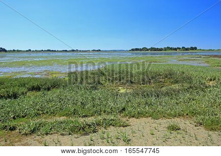 Salt marsh with Salicornia (in the foreground) in the Gulf of Morbihan, Brittany, France