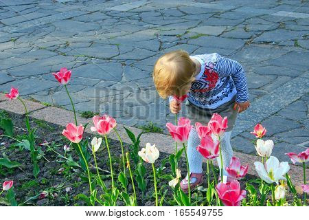 little girl scents tulips bent low under the flowerbed