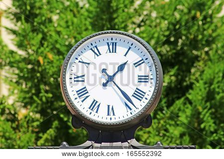 Clock on the brght green leaves background