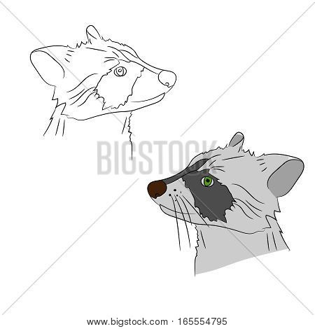 Two raccoon on a white background, vector