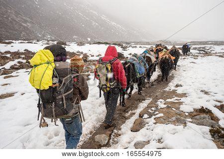 Khumbu region Nepal - 15 March 2015: Trekkers sherpas and yak shepherds in the Himalayan Region during snowstorm