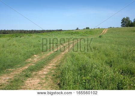 Summer countryside landscape with rural road goes to horizon, clear sky, field, and forest in summer day,