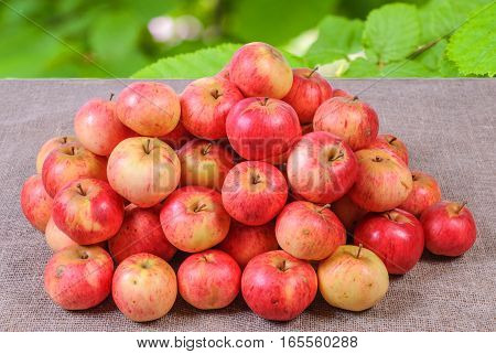 A bunch of red apples on a fabric background with a blurred background summer background of green leaves