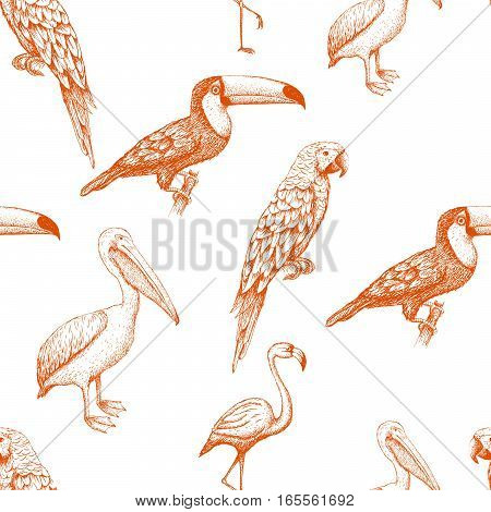 seamless pattern with exotic birds. ector illustration