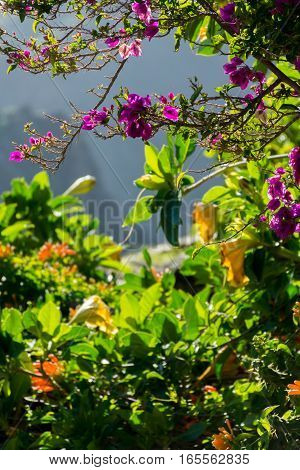 Nature in Masca Village Tenerife - exotic flowers and mountains